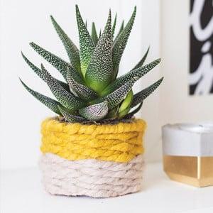 macetero-para-un-cactus-diy