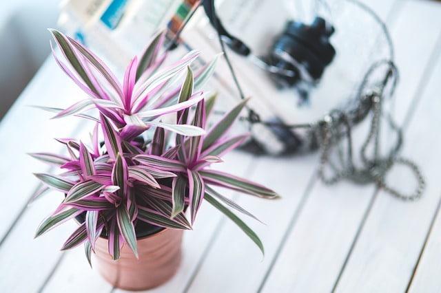 plant-791052_640