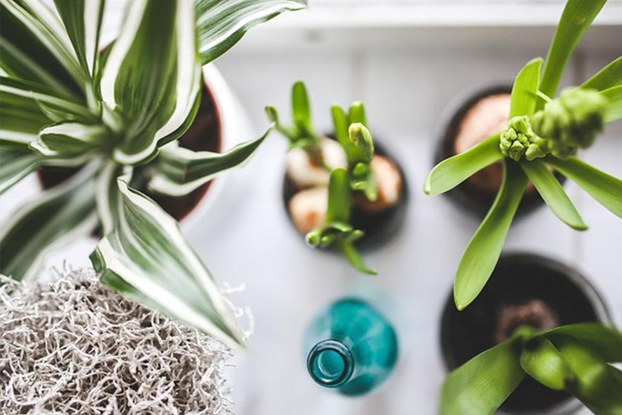 plantasportada