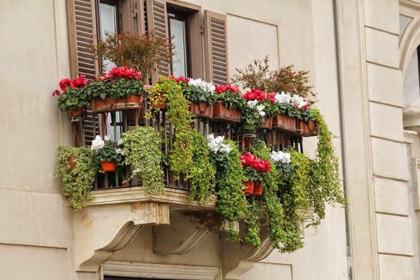plantas-en-balcon